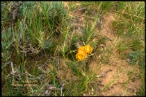 yellow cactus flowers