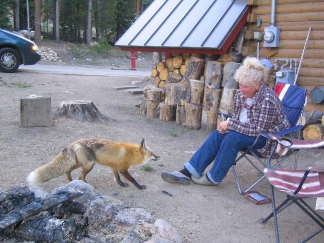 js fox 4170
