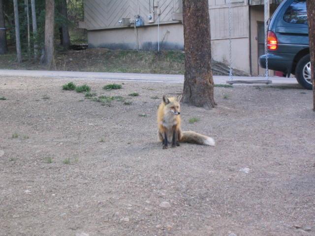 js fox 4178