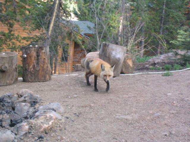js fox 4191