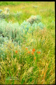 tall shot of red flowers and grassy meadow