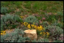 yellow rock, yellow and purple flowers, barbed wire fence